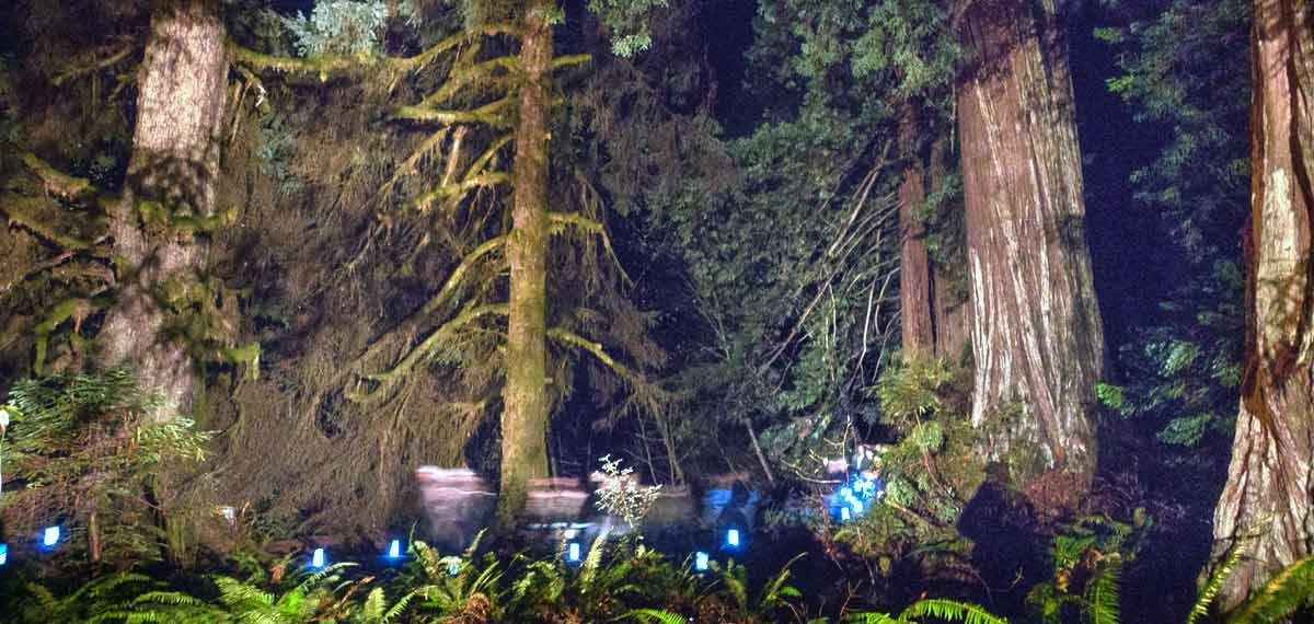 Redwoods by Candlelight. Gary Todorff