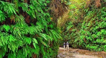 Fern Canyon: Remote wonder, no crowds