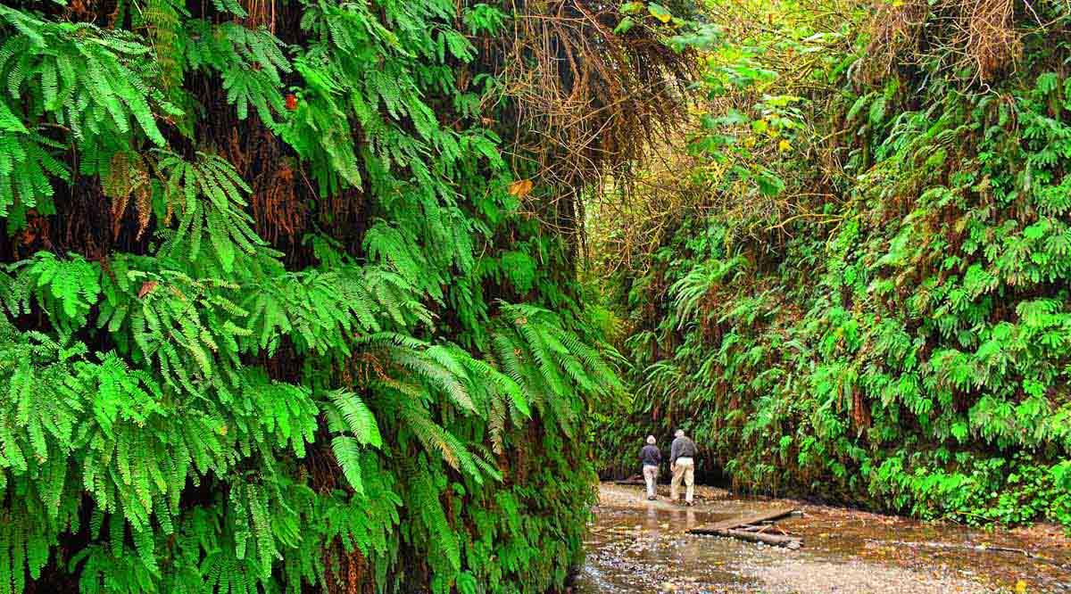 Fern Canyon in Redwood National & State Parks. Kirt Edblom