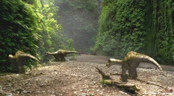Raptors delight awaits in Redwoods