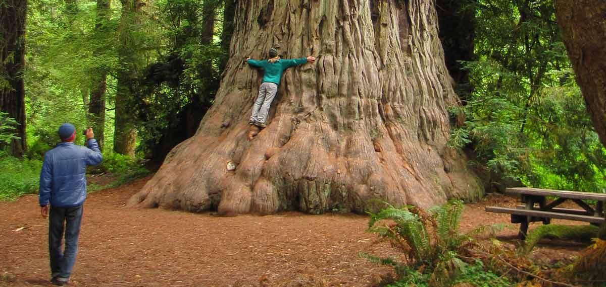 Picnic Tree. Mario Vaden
