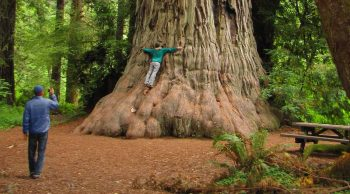 Best picnic spots in the redwoods