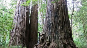 The ten most amazing trees
