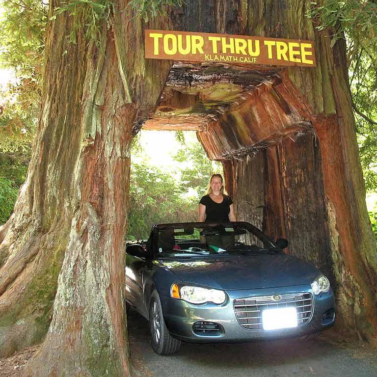 Klamath Tour Thru Tree
