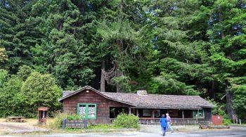 Redwood NSP visitors centers reopen