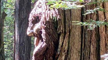 Burl-ieve it or not: Forest fantasticals
